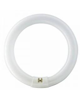 Лампа люм. кольцевая 22 Вт G10q, d=26mm D=216mm, 6500К дневной